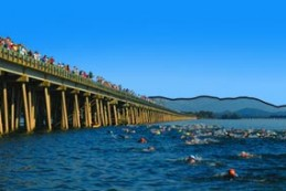 long-bridge-swim